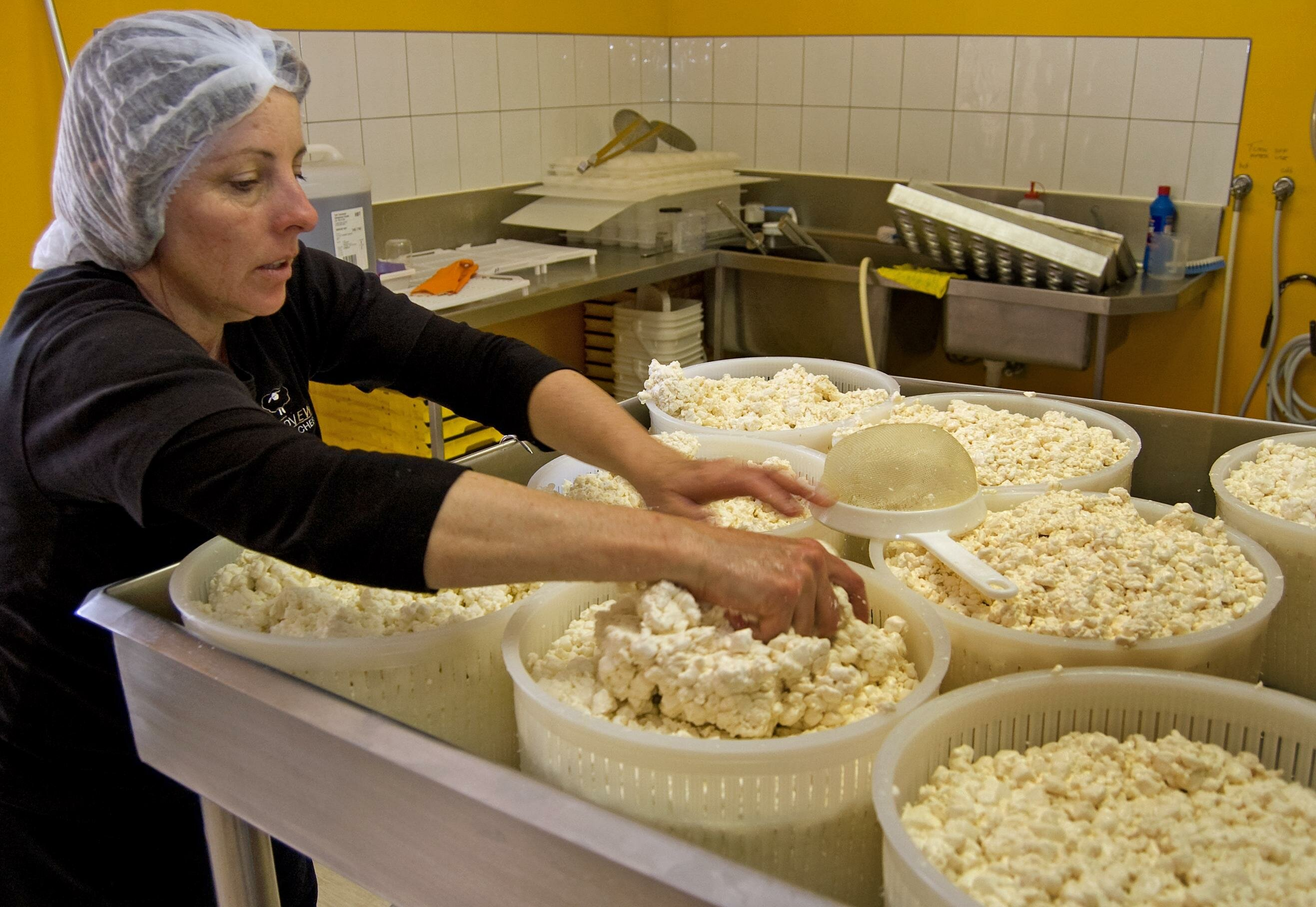 Cheese Making Grandvewe Cheeses