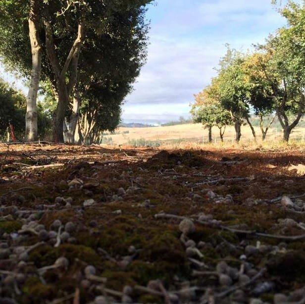 Tamar Valley Truffles Farm