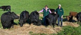 Rawlings & Kirup Park Dexter Studs - A Tasmanian Success Story