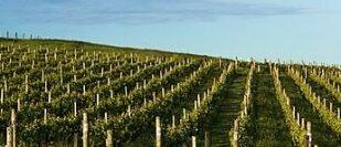 Delamere Vineyard