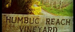 Humbug Reach Vineyard