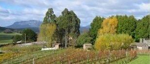 Wilmot Hills Vineyard
