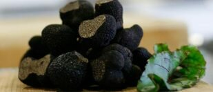 Tamar Valley Truffles - A European Flavour in Tasmania